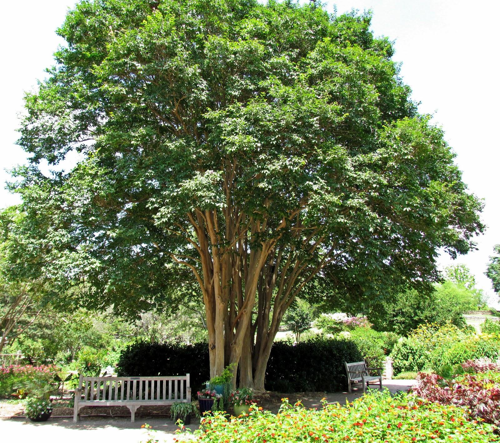 Garden Homes San Antonio. Best San Antonio Botanical Gardens. Free .