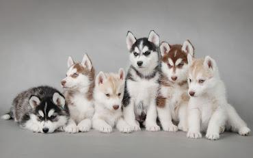 #8 Puppy Wallpaper