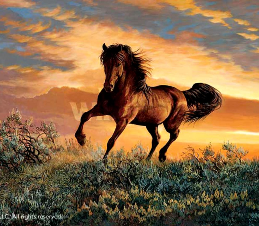 Mustang Horse  Amazing Wallpapers