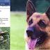Διασώστες και σκύλος ψάχνουν μια χελώνα...