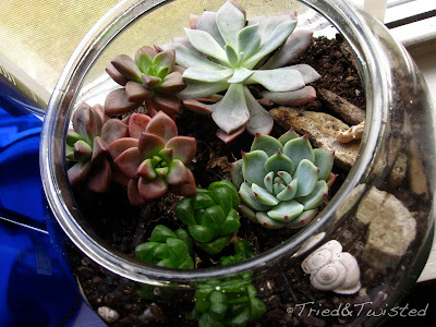 Planting Succulents with Tried & Twisted