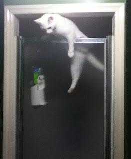 cat hanging over shower door