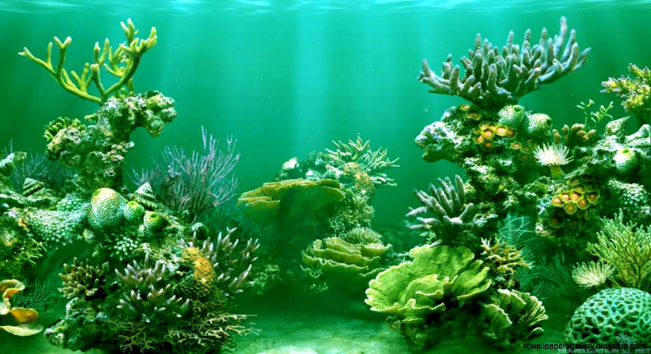 Awesome Scenery of Underwater Wallpapers  Travelization