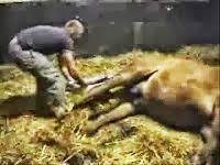 doğum yapan at canlı