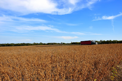 soybeans-hickory-ridge-studio