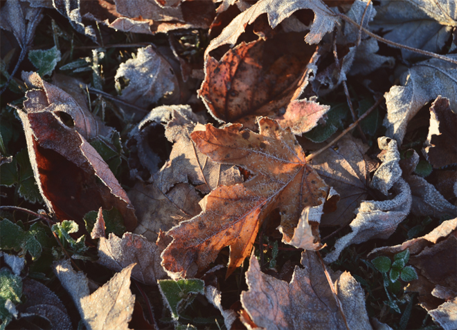 The Flying Clubhouse: Frosty Leaves