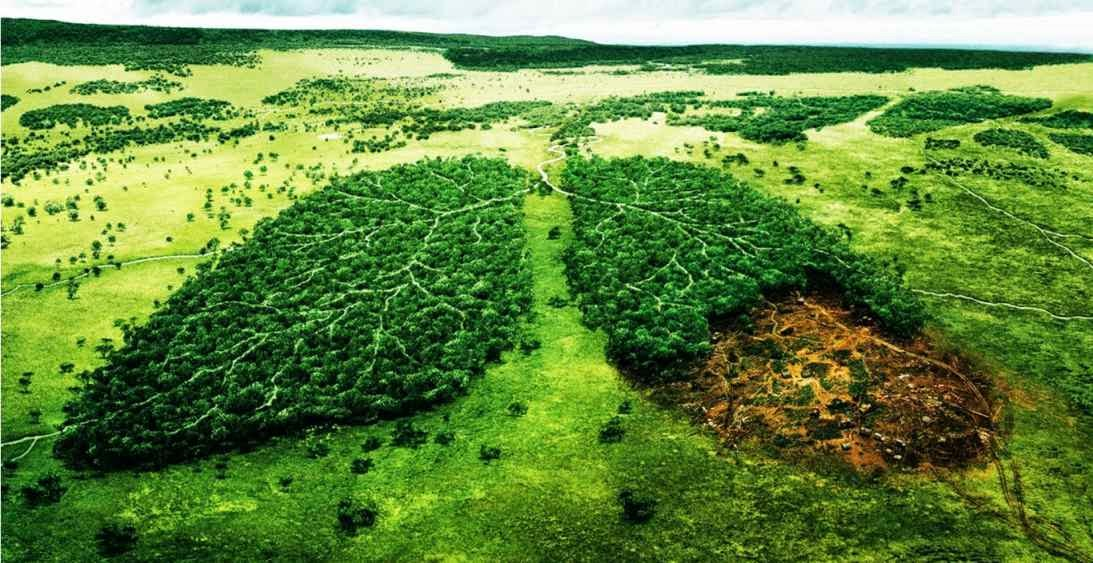 El medio ambiente como bien jurídico-penal