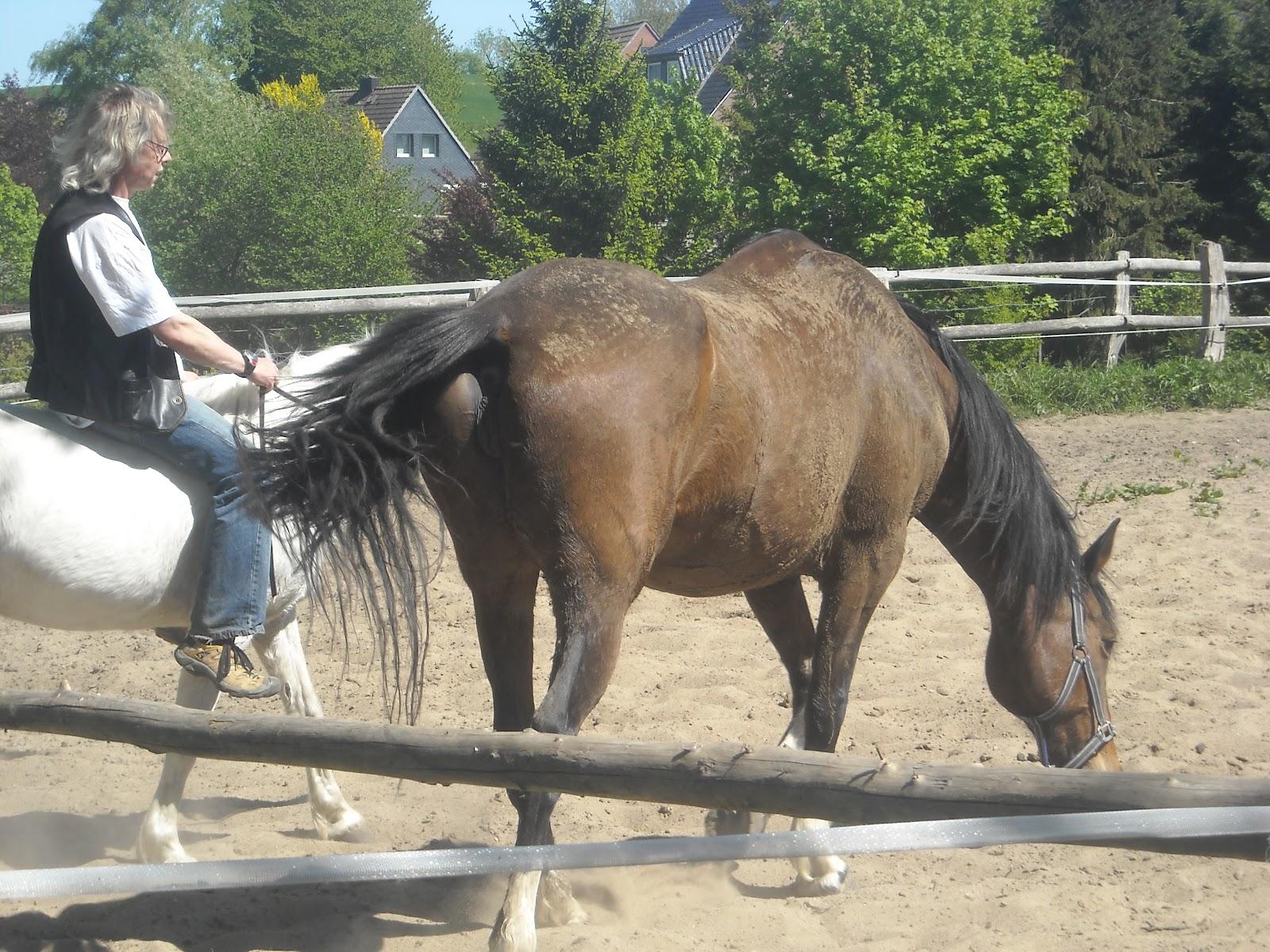 schlechter fellwechsel beim pferd
