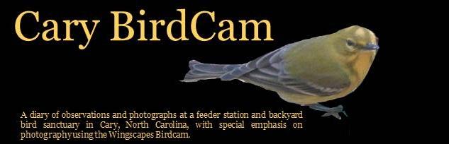 Cary BirdCam Blog