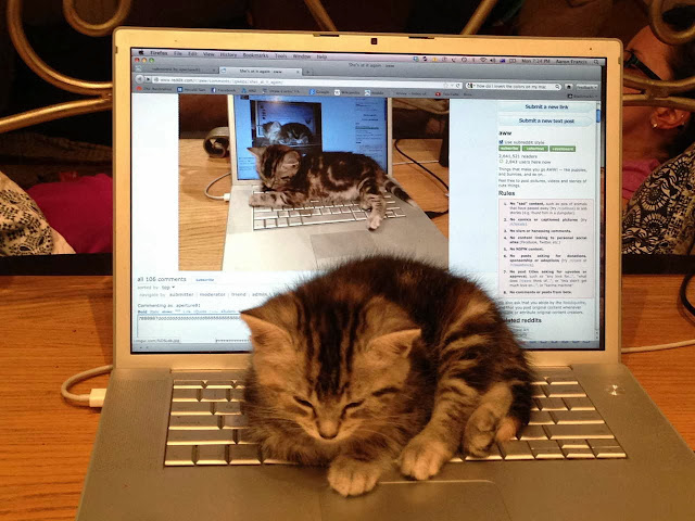 Funny cats - part 81 (40 pics + 10 gifs), cat pics, kitten sleeps on laptop