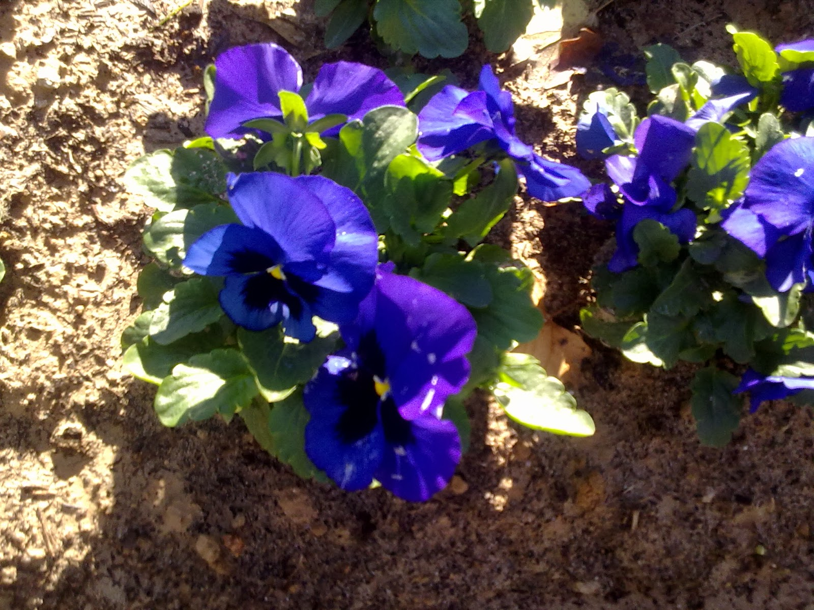 Cinco tareas de otoño indispensables para tu jardín Casa