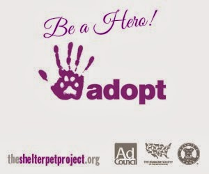 Adopt a Shelter pup or kitty!