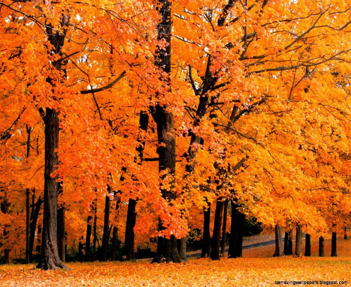Autumn Leaves Trees Images 6 HD Wallpapers