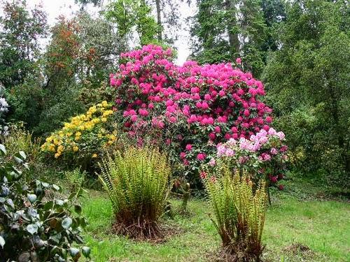 Arte y jardiner a jardines secos de bajo mantenimiento for Jardines con arboles y arbustos