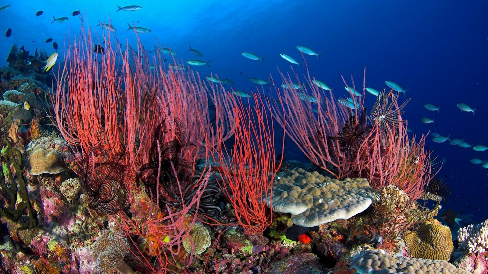 Wonderful under sea wallpaper wallpaper for desktop - Sea coral wallpaper ...