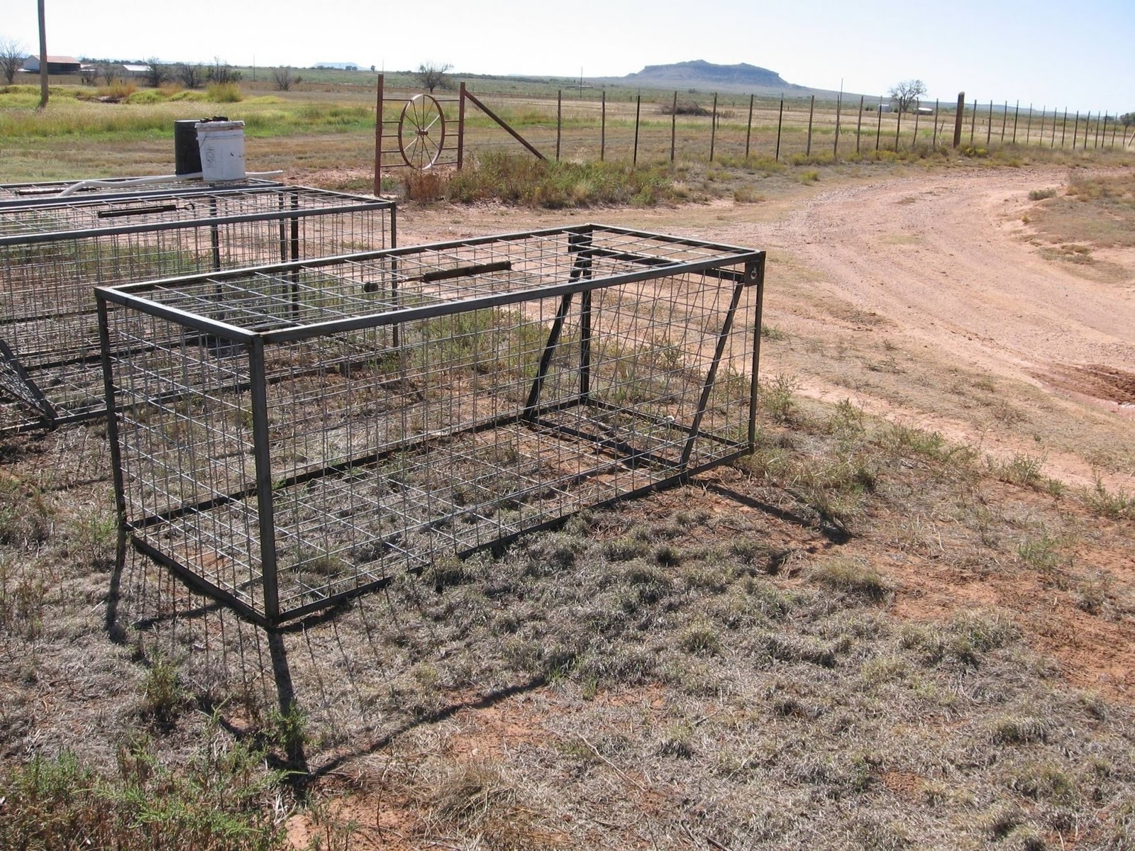 Build Deer Trap http://karlfmoffatt.blogspot.com/2012/01/wild-hogs-invade-new-mexico-threaten-to.html