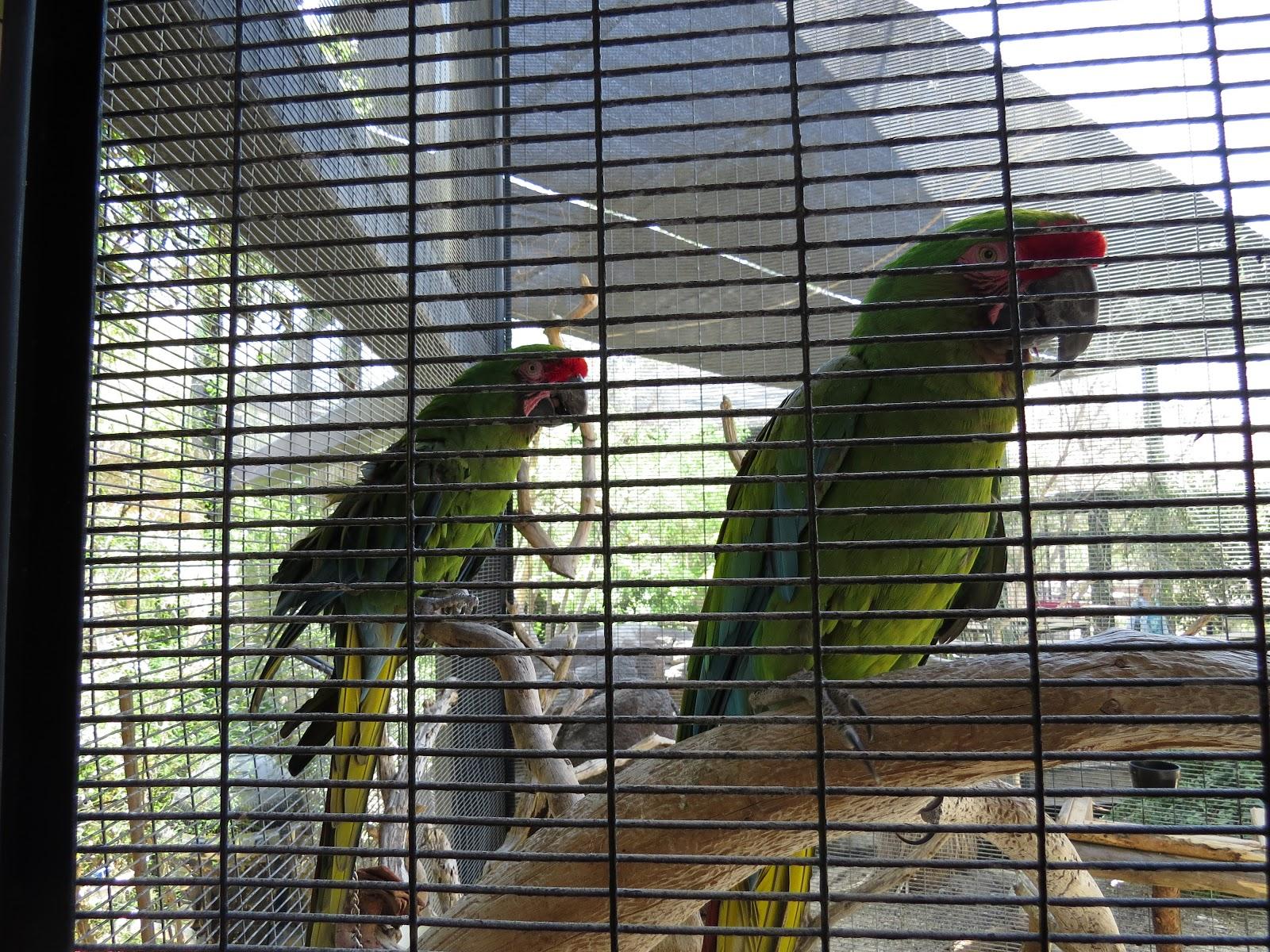 The Living Desert macaw