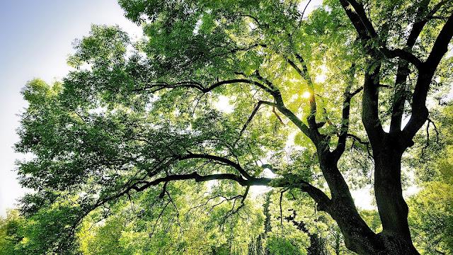 Tree In Sunshine HD Wallpaper