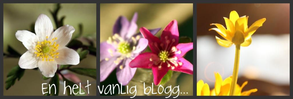 En helt vanlig blogg...