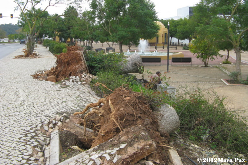Tornado damage to Silves' trees