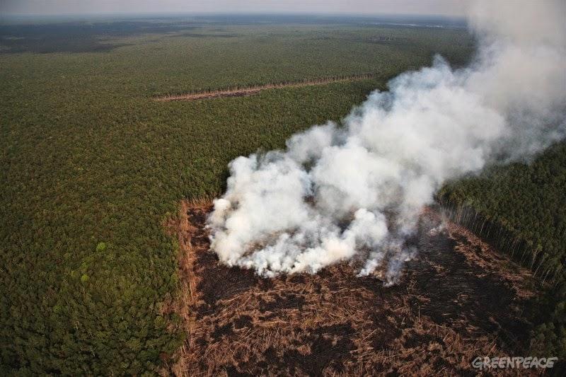 Summit Forests Asia Akan Digelar Pekan Depan di Jakarta