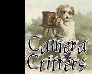 Misty Dawn's Camera Critters