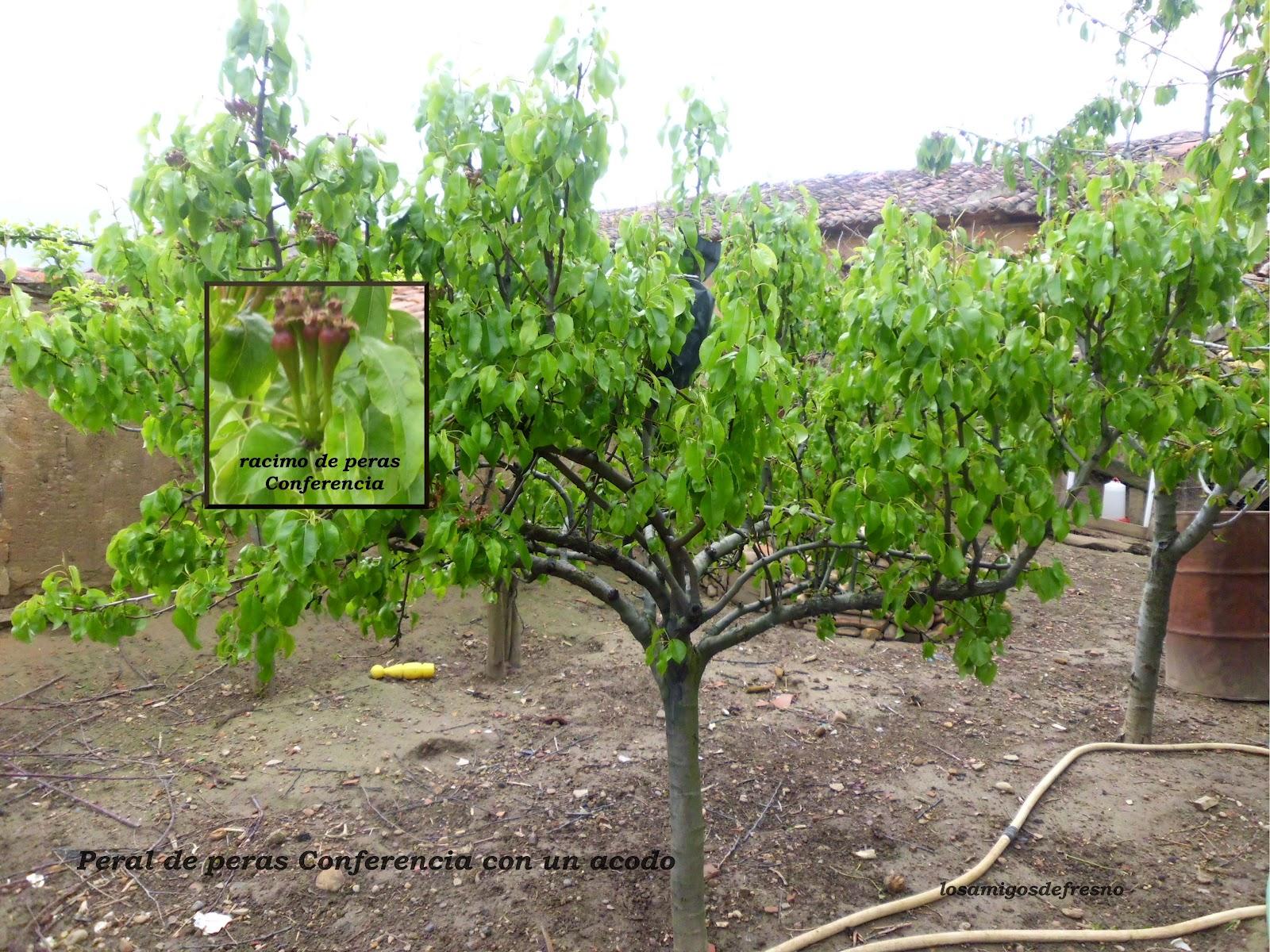 Losamigosdefresno el mundo de pilotos iii el huerto y for Arbustos ornamentales