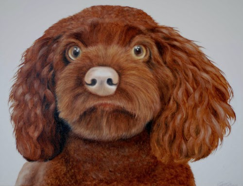 Pet Portrait Cockapoo oil on canvas