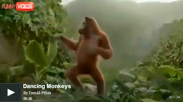 http://funkidos.com/videos-collection/funny-videos/dancing-monkeys