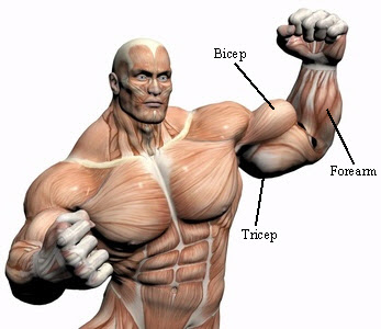 Simple Tips, Tricks And Techniques To Build Your Muscles Mass