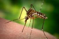 obat tradisional herbal penyakit malaria