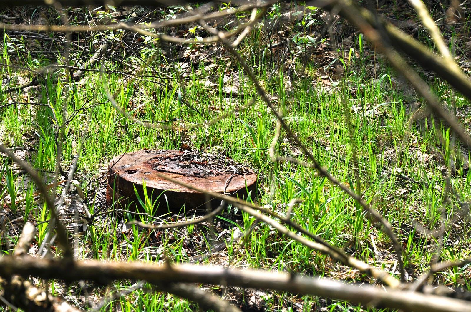 Małachów, młyn. Pierwsze odnalezione koło młyńskie. Foto. KW.