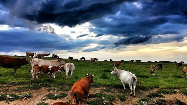 Βόρρας, Καϊμακτσαλάν, Πέλλα, Μακεδονία