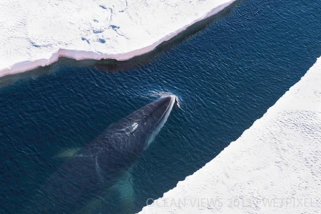 фото кита сверху совсем близко