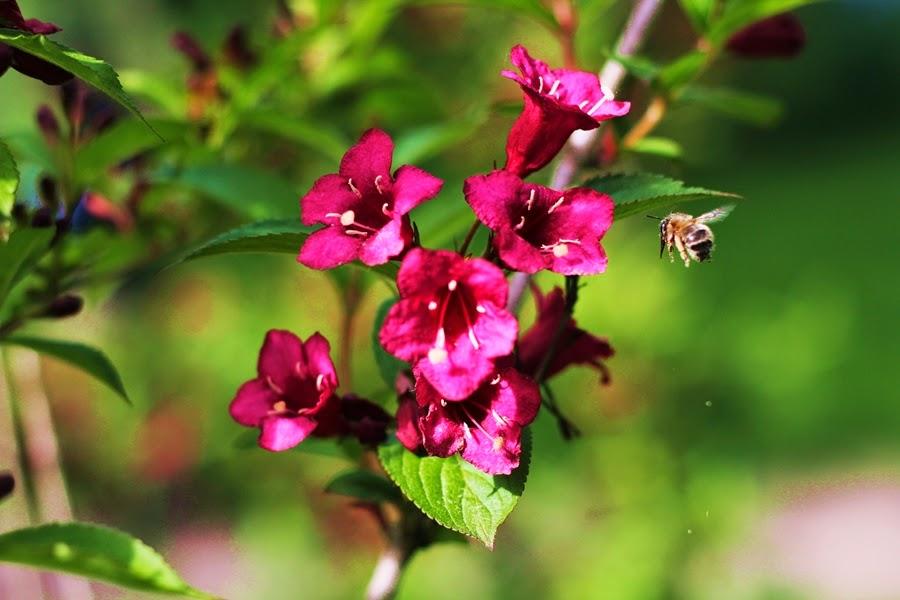 flower biene natur fotografie