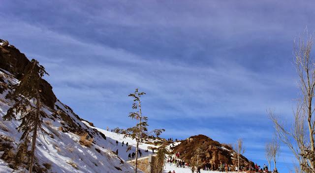 escapada a sierra nevada con niños, mirlo blanco, hoya mora