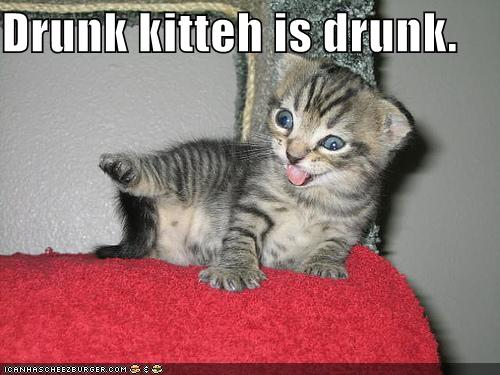 funny images of kittens. Wednesday, February 23, 2011