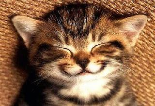 Kucing Tersenyum