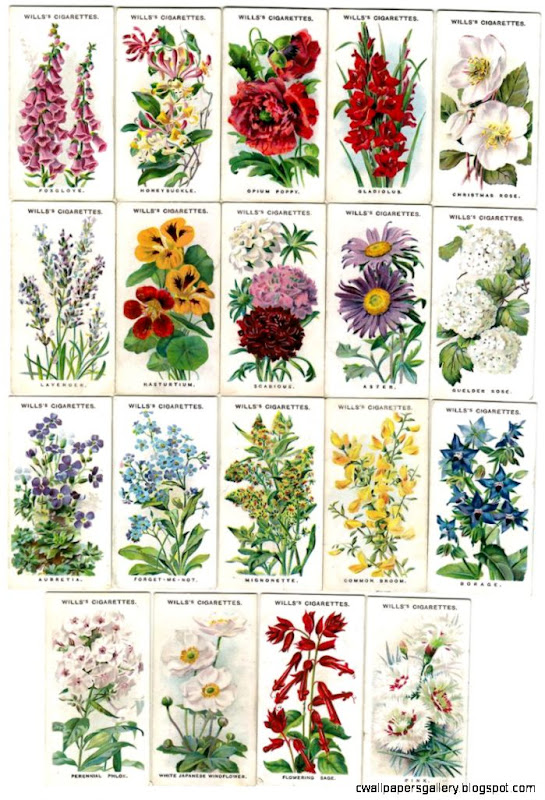 Names and illustrations of traditional English Cottage Garden