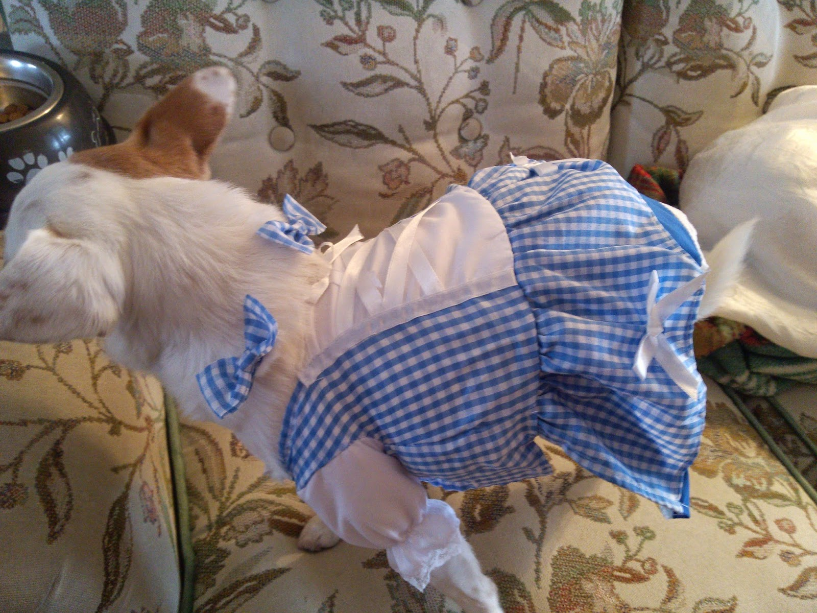 Anytime Costumes Dorothy Wizard of Oz Dog Costume Review