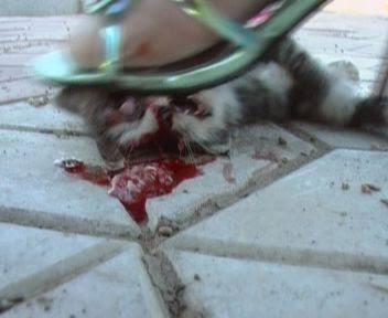 pijak sampai pecah kepala anak kucing