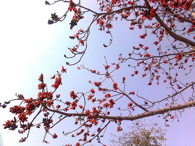 http://3.bp.blogspot.com/-JDFV4DiHRRU/TV_kyQIsJdI/AAAAAAAAAgI/i78PmUHJyec/s1600/Photo0991.jpg