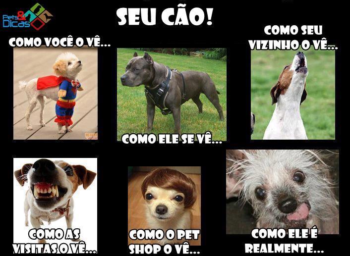 Fotos Engraçadas De Animais Com Frases Para Facebook Pets E Dicas