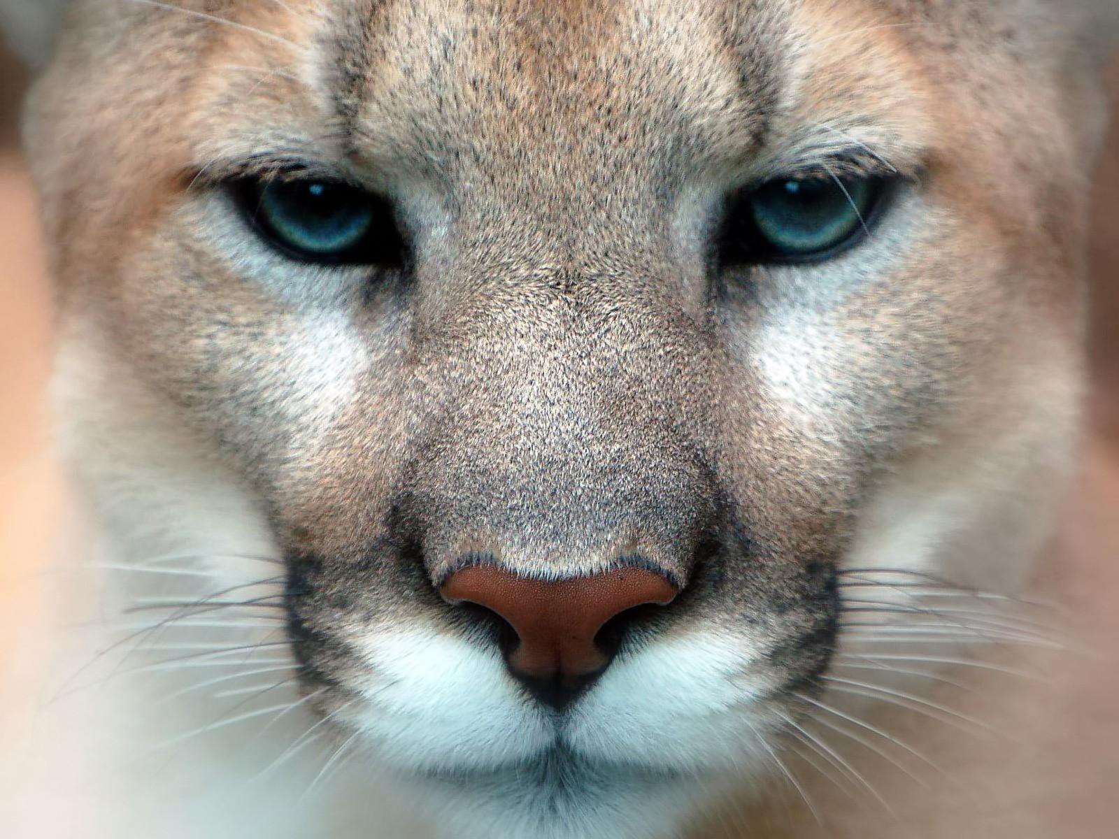 http://3.bp.blogspot.com/-JDnWG0Pg-ZQ/TcvqeOTcv2I/AAAAAAAABg4/lPYe82dJ4r4/s1600/Puma_1.jpg