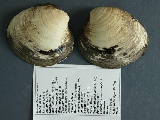 Record Old Mollusk