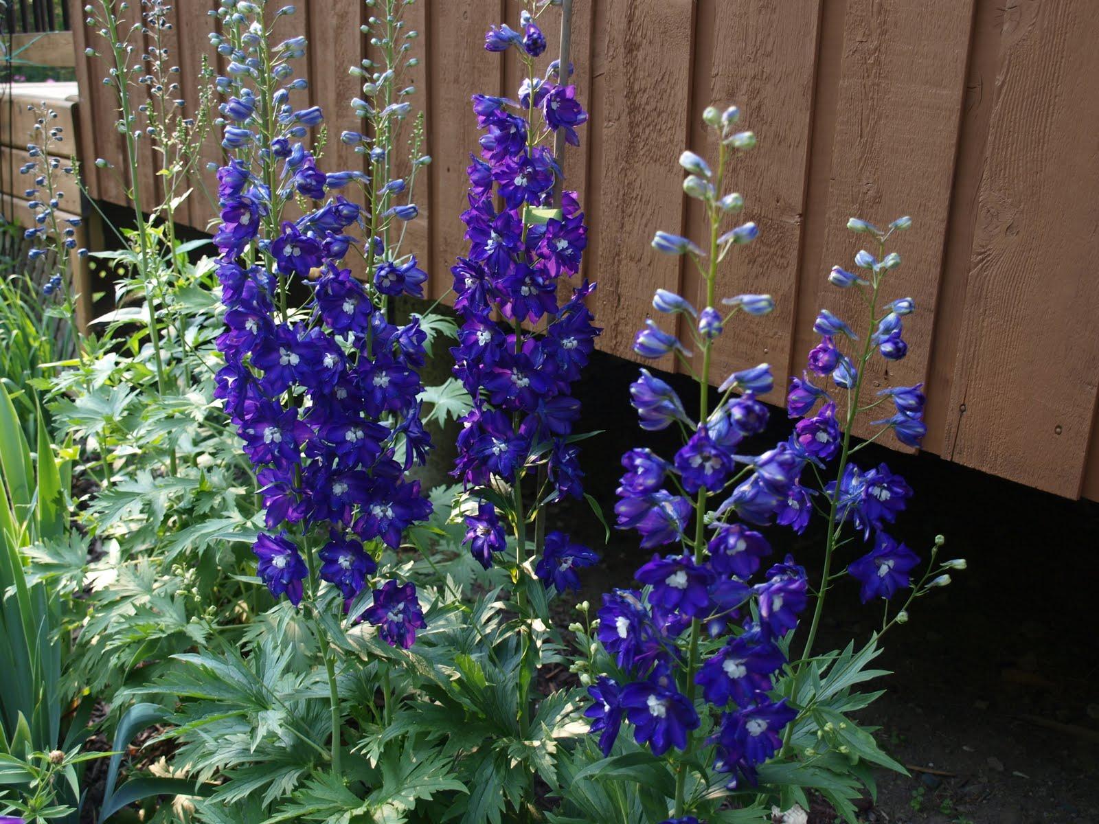 My Cottage Garden Tuesday In My Garden