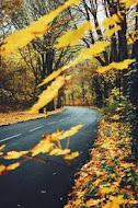 Осень- краса