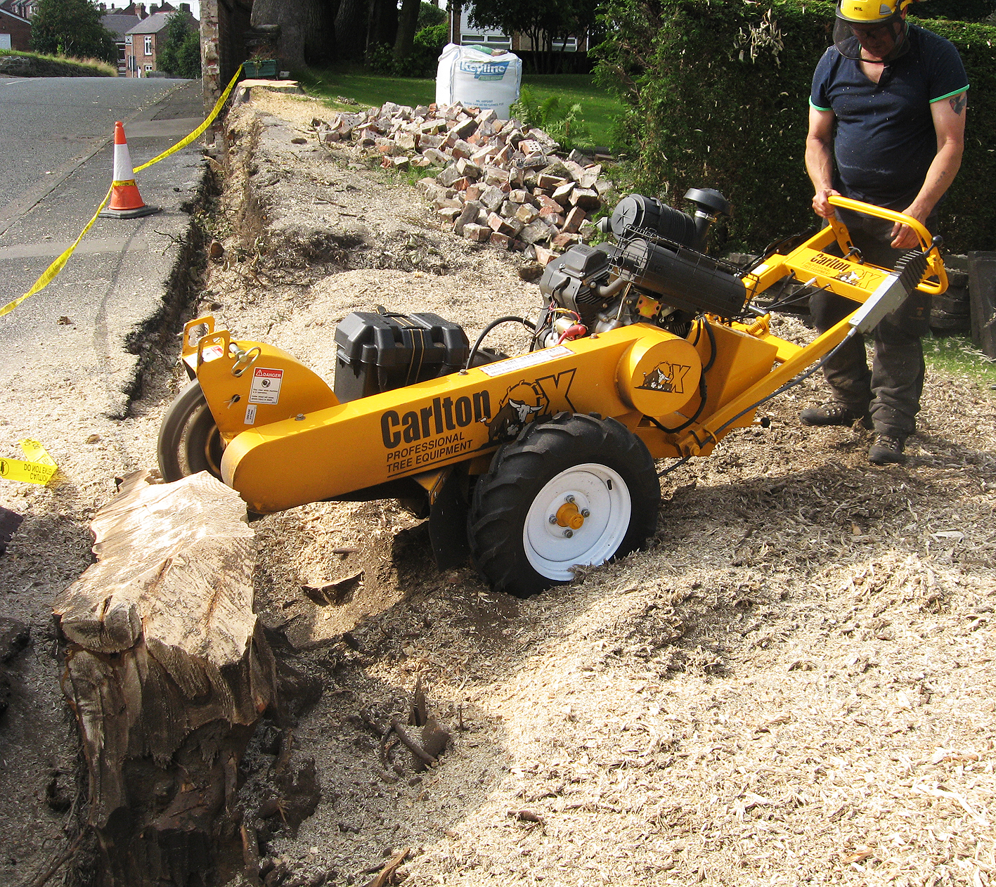 Image Result For Removing Tree Roots