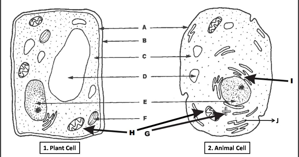 plant cell and animal cell diagram quiz