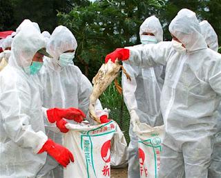 China bird virus likely silent threat
